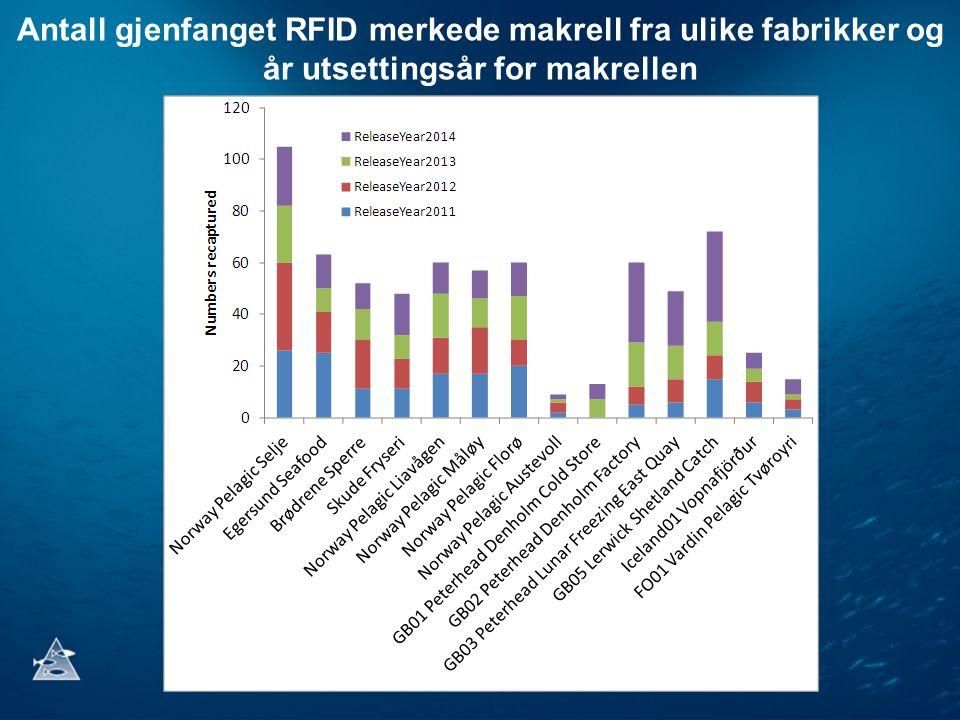 Antall gjenfanget RFID merkede makrell fra ulike fabrikker og år utsettingsår for makrellen