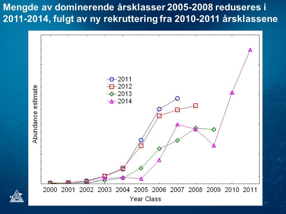 Mengde av dominerende årsklasser 2005-2008 reduseres i 2011-2014, fulgt av ny rekruttering fra 2010-2011 årsklassene