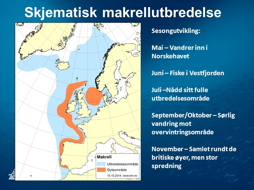 Skjematisk makrellutbredelse Sesongutvikling: Mai – Vandrer inn i Norskehavet Juni – Fiske i Vestfjorden Juli –Nådd sitt fulle utbredelsesområde September/Oktober – Sørlig vandring mot overvintringsområde November – Samlet rundt de britiske øyer, men stor spredning