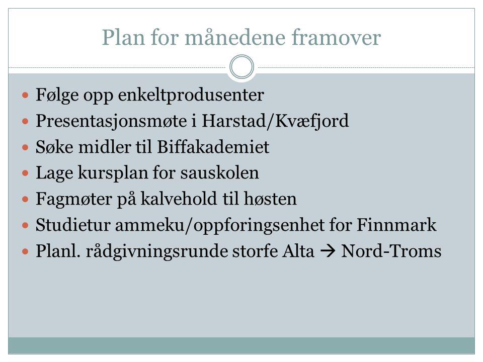 Plan for månedene framover Følge opp enkeltprodusenter Presentasjonsmøte i Harstad/Kvæfjord Søke midler til Biffakademiet Lage kursplan for sauskolen