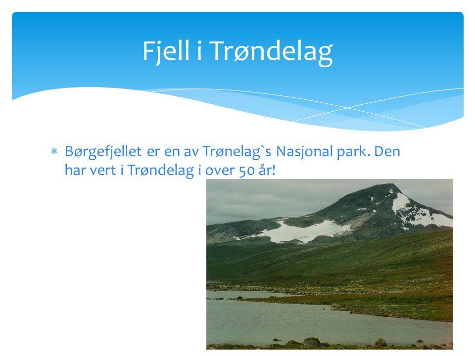Fjell i Trøndelag  Børgefjellet er en av Trønelag`s Nasjonal park.