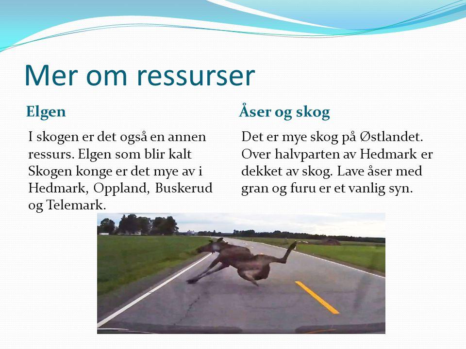Mer om ressurser Elgen Åser og skog I skogen er det også en annen ressurs. Elgen som blir kalt Skogen konge er det mye av i Hedmark, Oppland, Buskerud