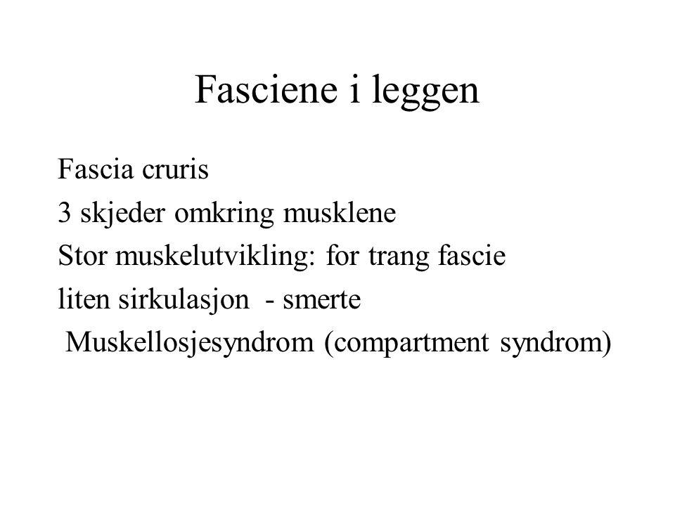 Fasciene i leggen Fascia cruris 3 skjeder omkring musklene Stor muskelutvikling: for trang fascie liten sirkulasjon - smerte Muskellosjesyndrom (compa