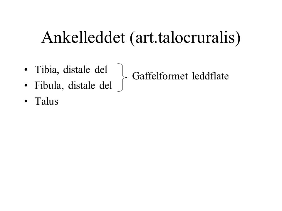 Ankelleddet (art.talocruralis) Tibia, distale del Fibula, distale del Talus Gaffelformet leddflate
