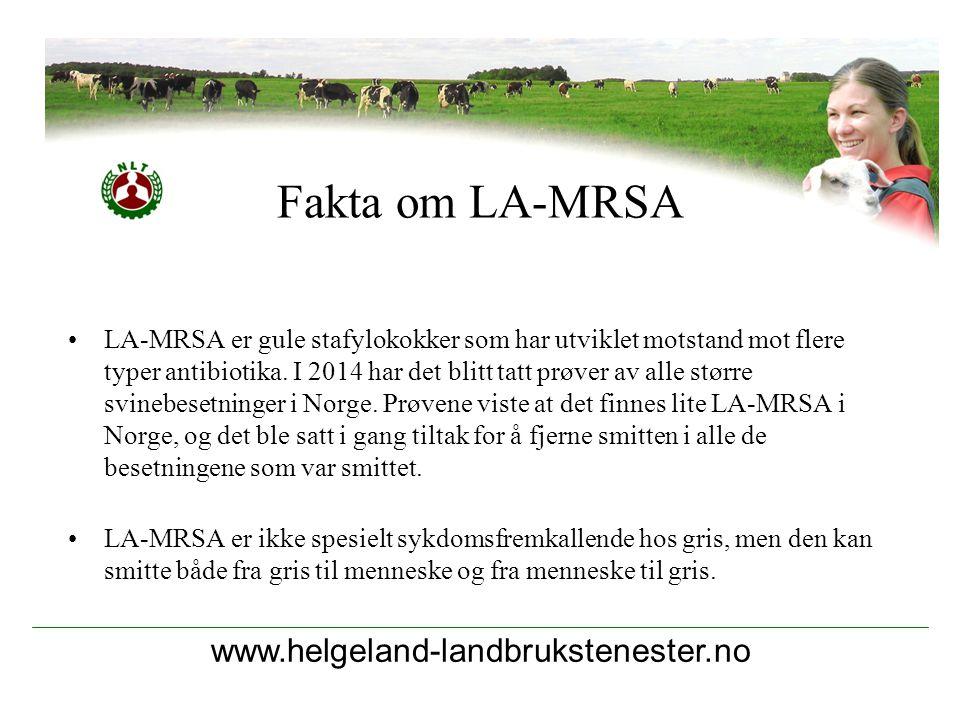 www.helgeland-landbrukstenester.no LA-MRSA er gule stafylokokker som har utviklet motstand mot flere typer antibiotika. I 2014 har det blitt tatt prøv
