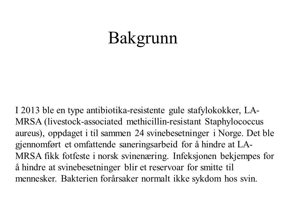 Bakgrunn I 2013 ble en type antibiotika-resistente gule stafylokokker, LA- MRSA (livestock-associated methicillin-resistant Staphylococcus aureus), op