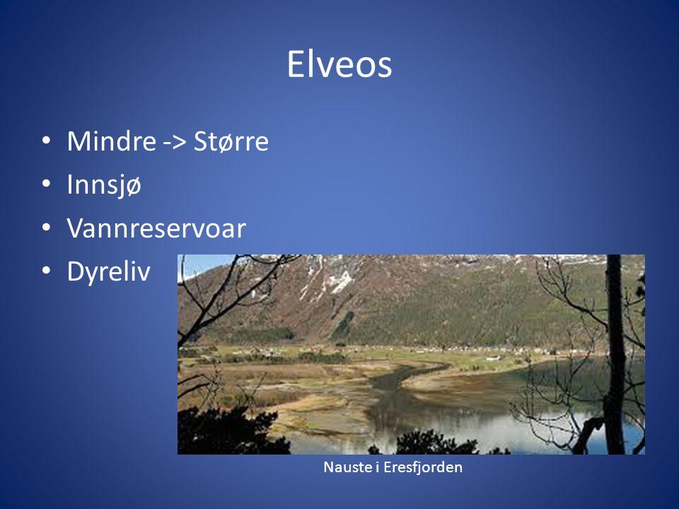 Elveos Mindre -> Større Innsjø Vannreservoar Dyreliv Nauste i Eresfjorden