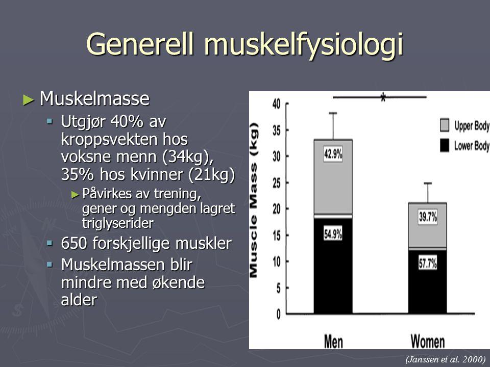 Generell muskelfysiologi ► Muskelmasse  Utgjør 40% av kroppsvekten hos voksne menn (34kg), 35% hos kvinner (21kg) ► Påvirkes av trening, gener og mengden lagret triglyserider  650 forskjellige muskler  Muskelmassen blir mindre med økende alder (Janssen et al.