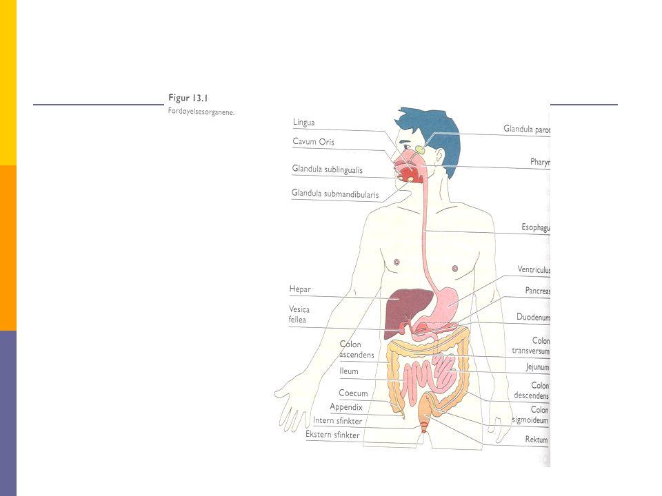 NORMAL TARMFUNKSJON  STYRES BÅDE AV: DET AUTONOME NERVESYSTEM  GLATT MUSKULATUR (PERISTATLTIKKEN)