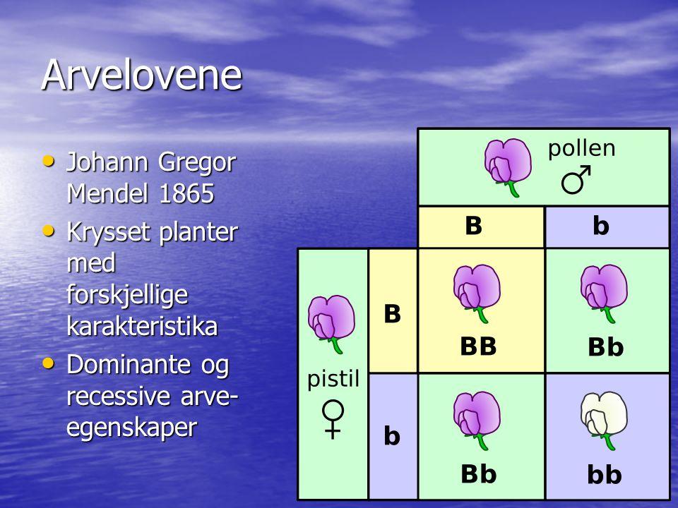 Arvelovene Johann Gregor Mendel 1865 Johann Gregor Mendel 1865 Krysset planter med forskjellige karakteristika Krysset planter med forskjellige karakt