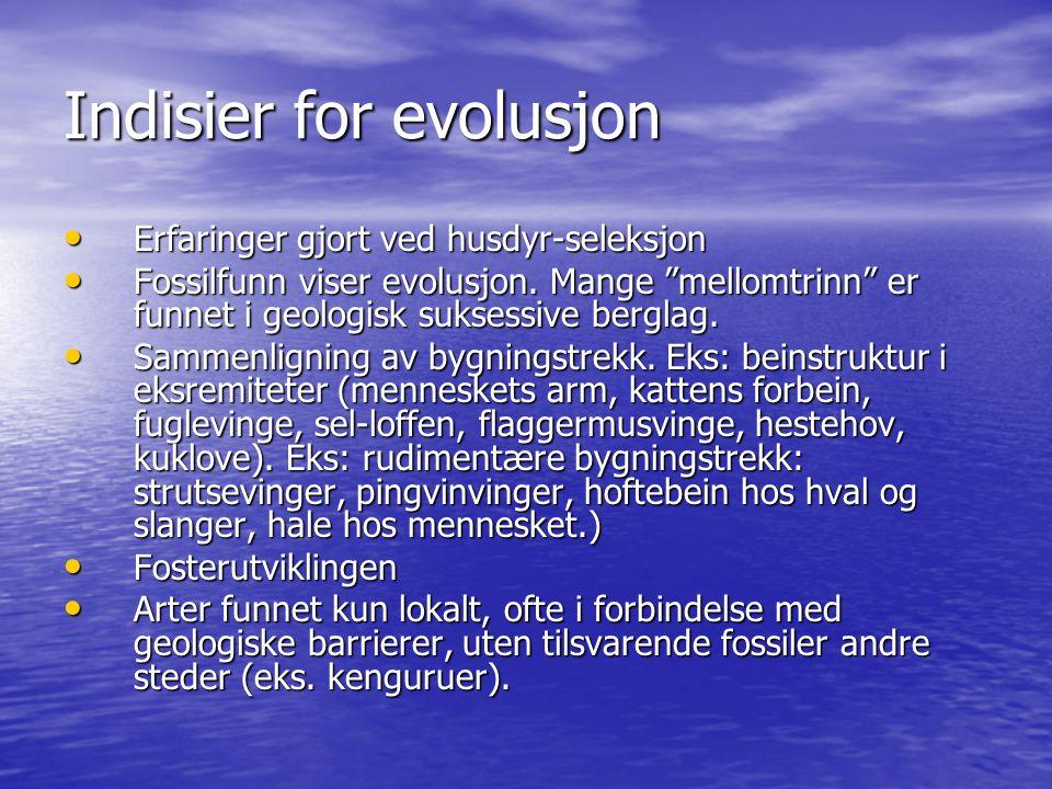 """Indisier for evolusjon Erfaringer gjort ved husdyr-seleksjon Erfaringer gjort ved husdyr-seleksjon Fossilfunn viser evolusjon. Mange """"mellomtrinn"""" er"""