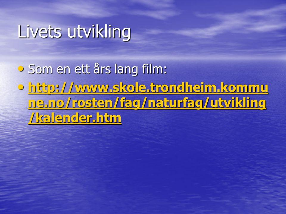 Som en ett års lang film: Som en ett års lang film: http://www.skole.trondheim.kommu ne.no/rosten/fag/naturfag/utvikling /kalender.htm http://www.skol