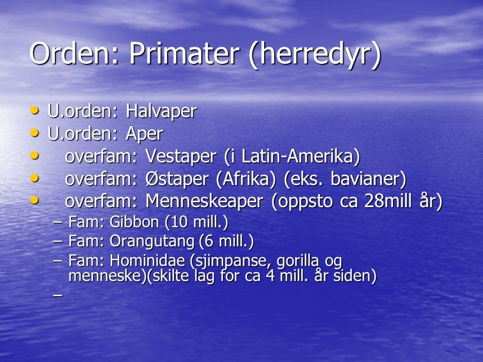 Orden: Primater (herredyr) U.orden: Halvaper U.orden: Halvaper U.orden: Aper U.orden: Aper overfam: Vestaper (i Latin-Amerika) overfam: Vestaper (i La