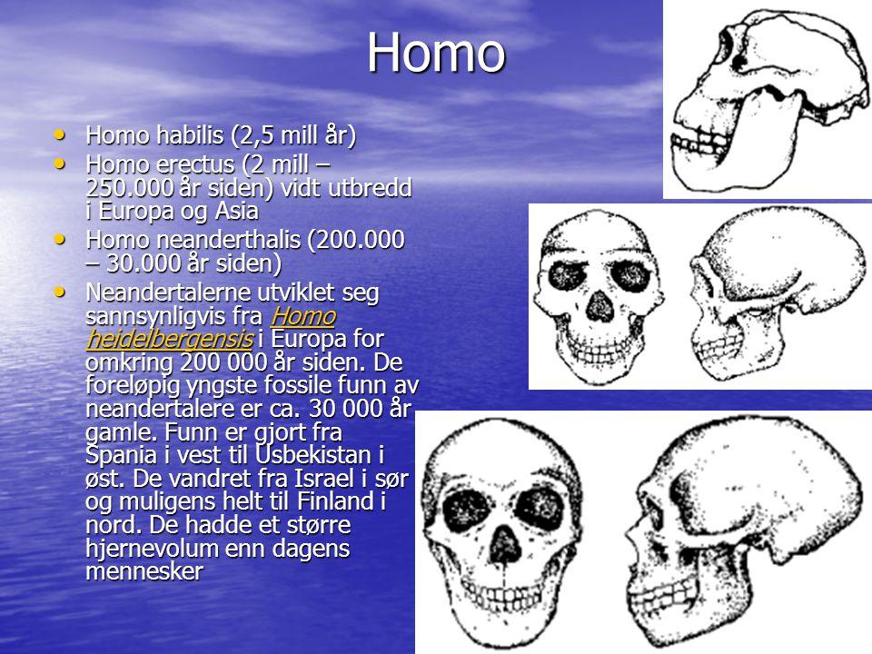 Homo Homo habilis (2,5 mill år) Homo habilis (2,5 mill år) Homo erectus (2 mill – 250.000 år siden) vidt utbredd i Europa og Asia Homo erectus (2 mill