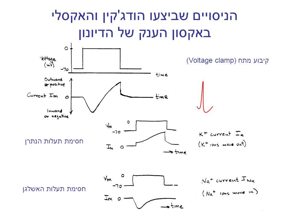 Na + E Na חיובי בטריית היון מתח הממברנה המתח בתא נקבע לפי חוק אוהם K+K+ K+K+ EKEK שלילי iמשוואת הזרם של יון  Na = 67* log([Na] out /[Na] in ) כא ממוליכות משוואת נרנסט קובעת את הבטריה של היון זרמים בתא הפרה-סינפטי  K = -90* log([K] out /[K] in )