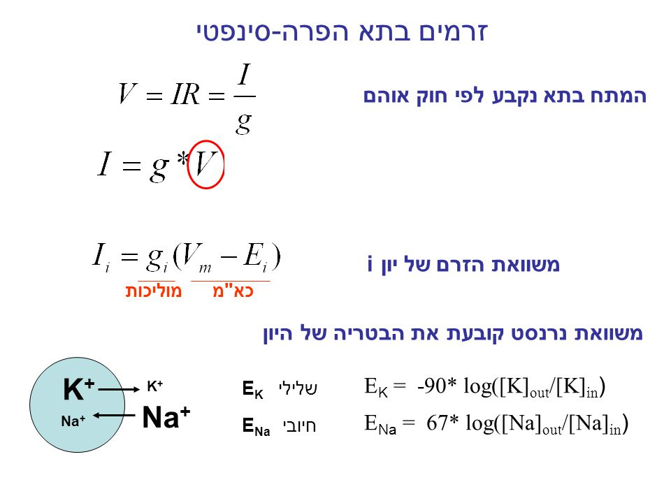 כיוון הזרם: זרם חיובי זרם שלילי הכא מ משפיע על כיוון ועוצמת הזרם נציב: V m = -60mv, E k = -75mv, E Na = +55mv עוצמת הזרם: נציב: V m = -60mv, E k = -100mv, E Na = +100mv הפרש V m - E i גדול יותר זרם גדול יותר EiEi VmVm VmVm EiEi EiEi VmVm EiEi VmVm