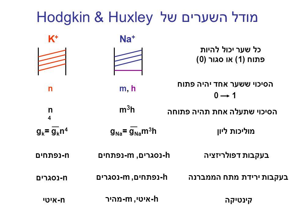 מודל השערים של Hodgkin & Huxley K+K+ Na + הסיכוי ששער אחד יהיה פתוח 0 1 m, hn כל שער יכול להיות פתוח (1) או סגור (0) g k = g k n 4 g Na = g Na m 3 hמו