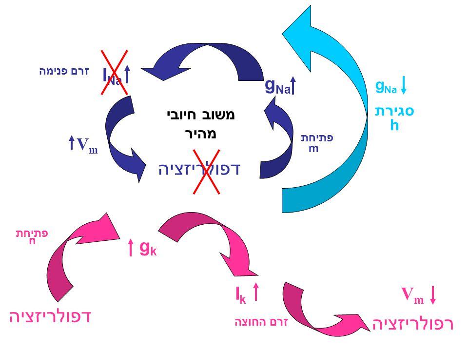 שלבי פוטנציאל הפעולה - תעלות ושערים דפולריזציה רפולריזציה כל התעלות סגורות שערי m סגורים, שערי h,n פתוחים חלקית פתיחת תעלות נתרן, שערי m נפתחים שערי h מתחילים להיסגר, שערי n מתחילים להיפתח סגירת תעלות אשלגן שערי n נסגרים, שערי h נפתחים פתיחת תעלות אשלגן (שערי n נפתחים) סגירת תעלות נתרן - סגירת שערי m היפרפולריזציה תגובה פסיבית