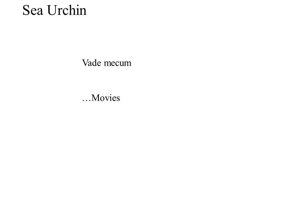 Vade mecum …Movies Sea Urchin