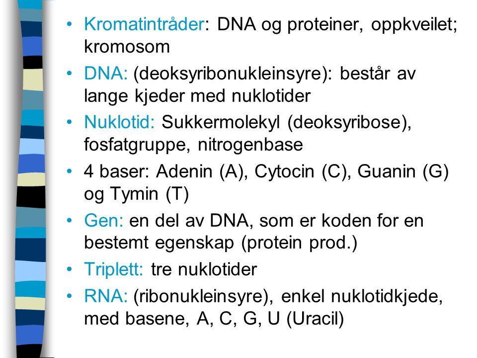 Kromatintråder: DNA og proteiner, oppkveilet; kromosom DNA: (deoksyribonukleinsyre): består av lange kjeder med nuklotider Nuklotid: Sukkermolekyl (de