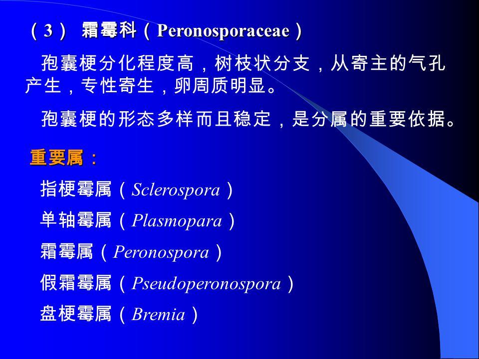( 3 ) 霜霉科( Peronosporaceae ) 孢囊梗分化程度高,树枝状分支,从寄主的气孔 产生,专性寄生,卵周质明显。 孢囊梗的形态多样而且稳定,是分属的重要依据。 重要属: 指梗霉属( Sclerospora ) 单轴霉属( Plasmopara ) 霜霉属( Peronospora