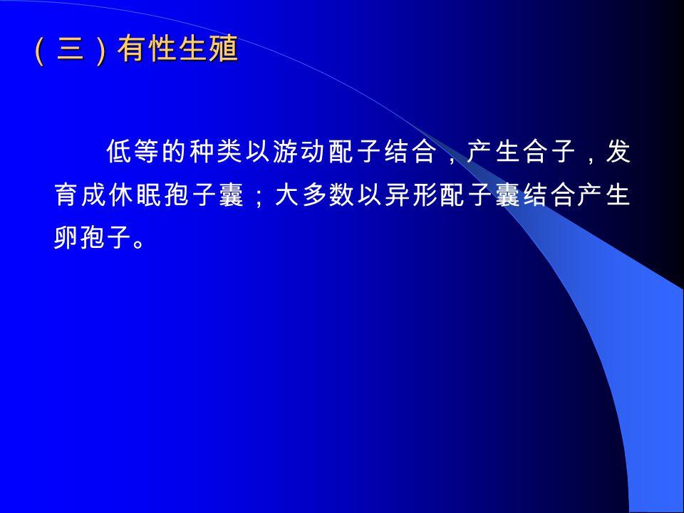 (三)有性生殖 低等的种类以游动配子结合,产生合子,发 育成休眠孢子囊;大多数以异形配子囊结合产生 卵孢子。