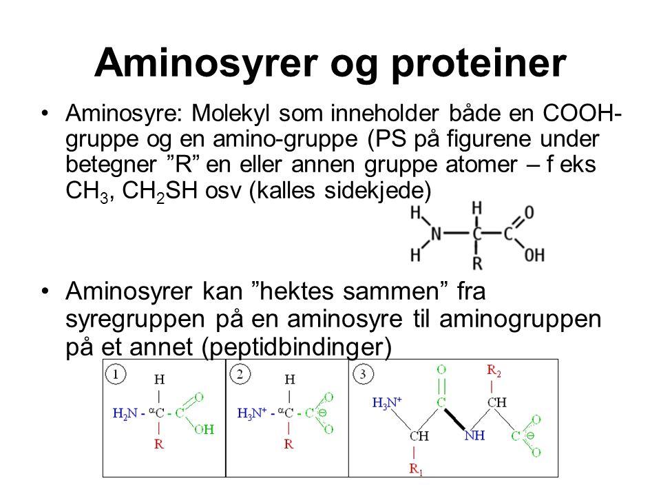 """Aminosyrer og proteiner Aminosyre: Molekyl som inneholder både en COOH- gruppe og en amino-gruppe (PS på figurene under betegner """"R"""" en eller annen gr"""
