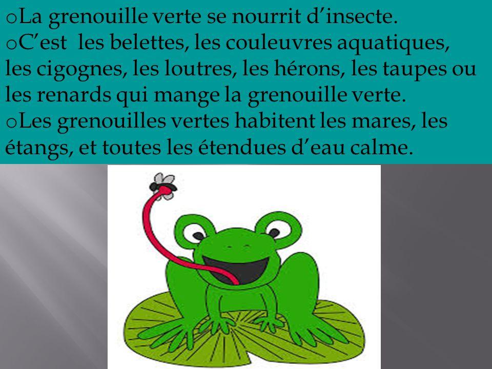 o La grenouille verte se nourrit d'insecte.