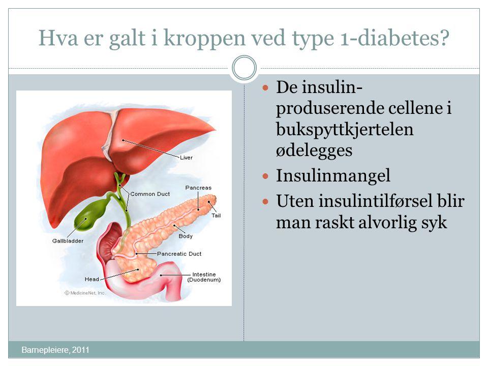 Hva er galt i kroppen ved type 1-diabetes? De insulin- produserende cellene i bukspyttkjertelen ødelegges Insulinmangel Uten insulintilførsel blir man