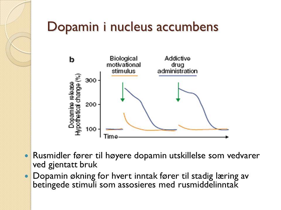 Dopamin i nucleus accumbens Rusmidler fører til høyere dopamin utskillelse som vedvarer ved gjentatt bruk Dopamin økning for hvert inntak fører til stadig læring av betingede stimuli som assosieres med rusmiddelinntak