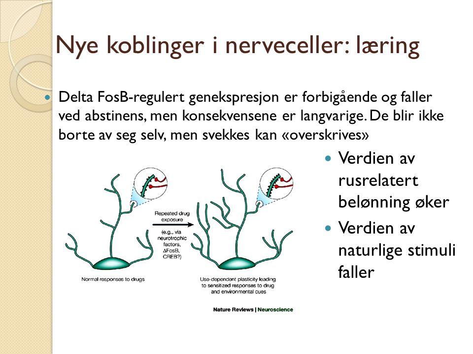 Nye koblinger i nerveceller: læring Delta FosB-regulert genekspresjon er forbigående og faller ved abstinens, men konsekvensene er langvarige.