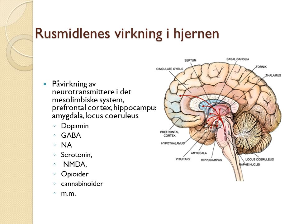 Rusmidlenes virkning i hjernen Påvirkning av neurotransmittere i det mesolimbiske system, prefrontal cortex, hippocampus, amygdala, locus coeruleus ◦ Dopamin ◦ GABA ◦ NA ◦ Serotonin, ◦ NMDA, ◦ Opioider ◦ cannabinoider ◦ m.m.