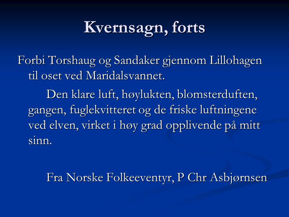 Kvernsagn, forts Forbi Torshaug og Sandaker gjennom Lillohagen til oset ved Maridalsvannet. Den klare luft, høylukten, blomsterduften, gangen, fuglekv