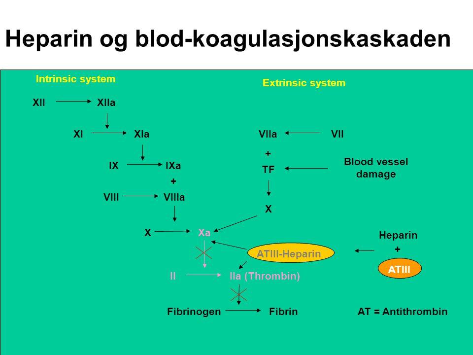 Heparin og blod-koagulasjonskaskaden XIIXIIa XIXIa IXIXa VIIIVIIIa + XXa X TF Blood vessel damage + VIIaVII II IIa (Thrombin) FibrinogenFibrin Intrins