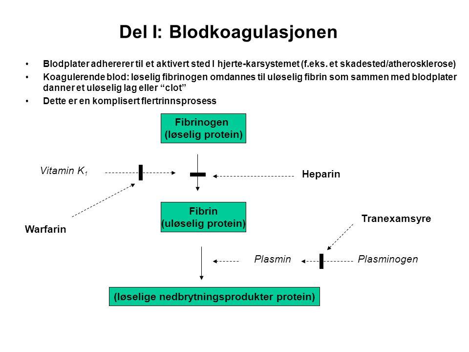 Del I: Blodkoagulasjonen Blodplater adhererer til et aktivert sted I hjerte-karsystemet (f.eks. et skadested/atherosklerose) Koagulerende blod: løseli