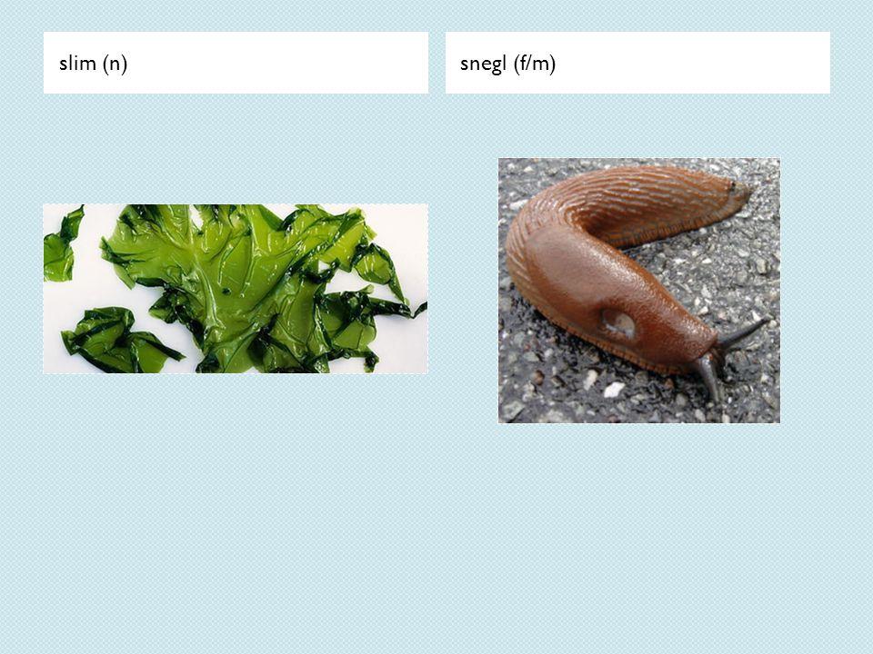 slim (n)snegl (f/m)