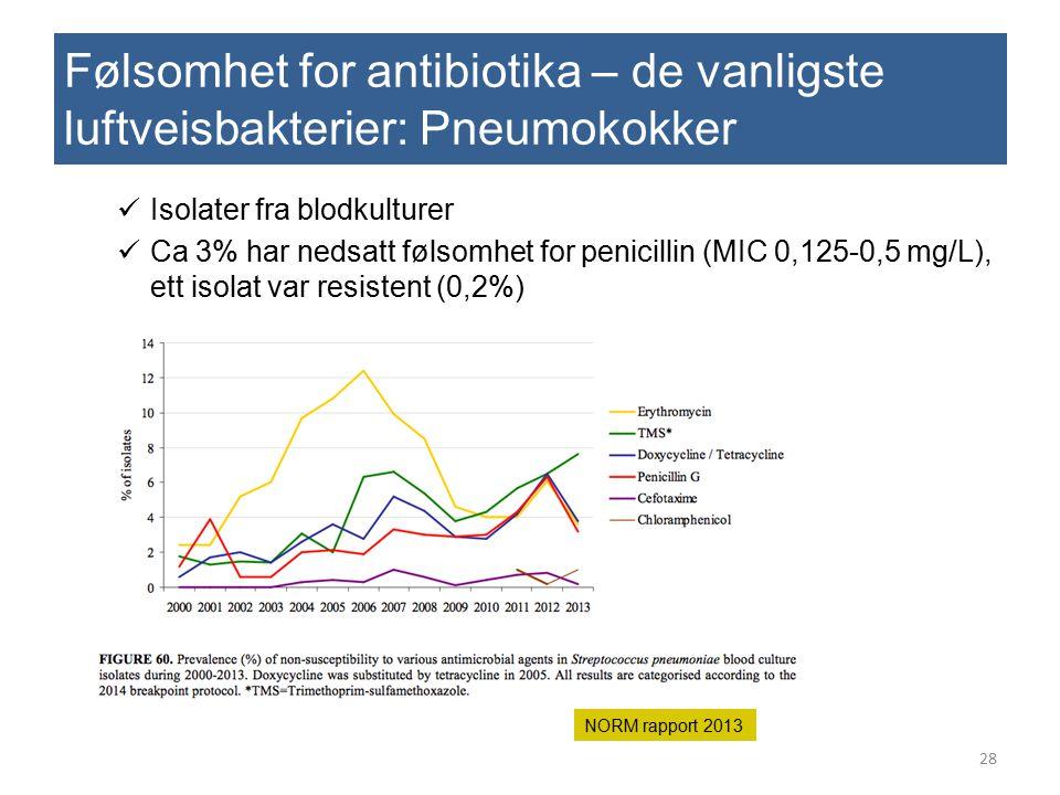 Følsomhet for antibiotika – de vanligste luftveisbakterier: Pneumokokker Isolater fra blodkulturer Ca 3% har nedsatt følsomhet for penicillin (MIC 0,1