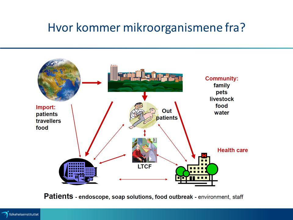 Hvor kommer mikroorganismene fra?