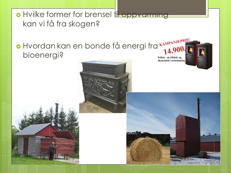  Hvilke former for brensel til oppvarming kan vi få fra skogen.