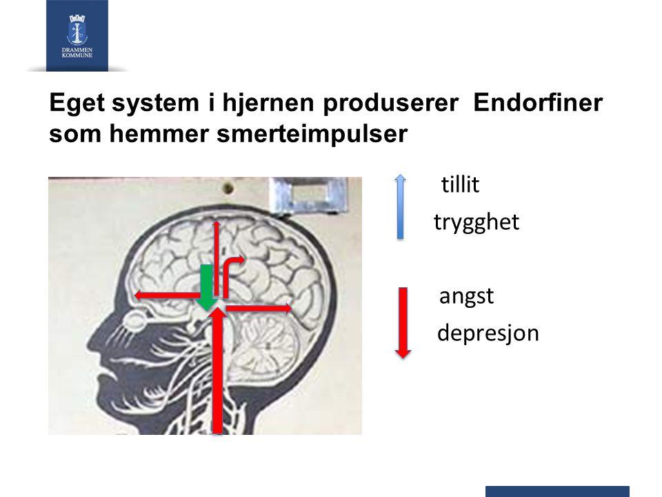 Eget system i hjernen produserer Endorfiner som hemmer smerteimpulser tillit trygghet angst depresjon