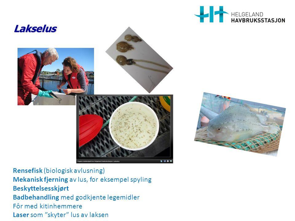 Lakselus Rensefisk (biologisk avlusning) Mekanisk fjerning av lus, for eksempel spyling Beskyttelsesskjørt Badbehandling med godkjente legemidler Fôr