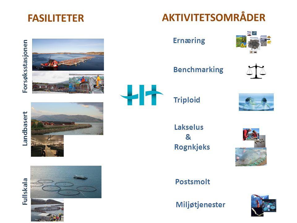 Bærekraftig havbruk Bærekraft RømmingFôrLakselus Lokaliteter og miljø Effektivt husdyr