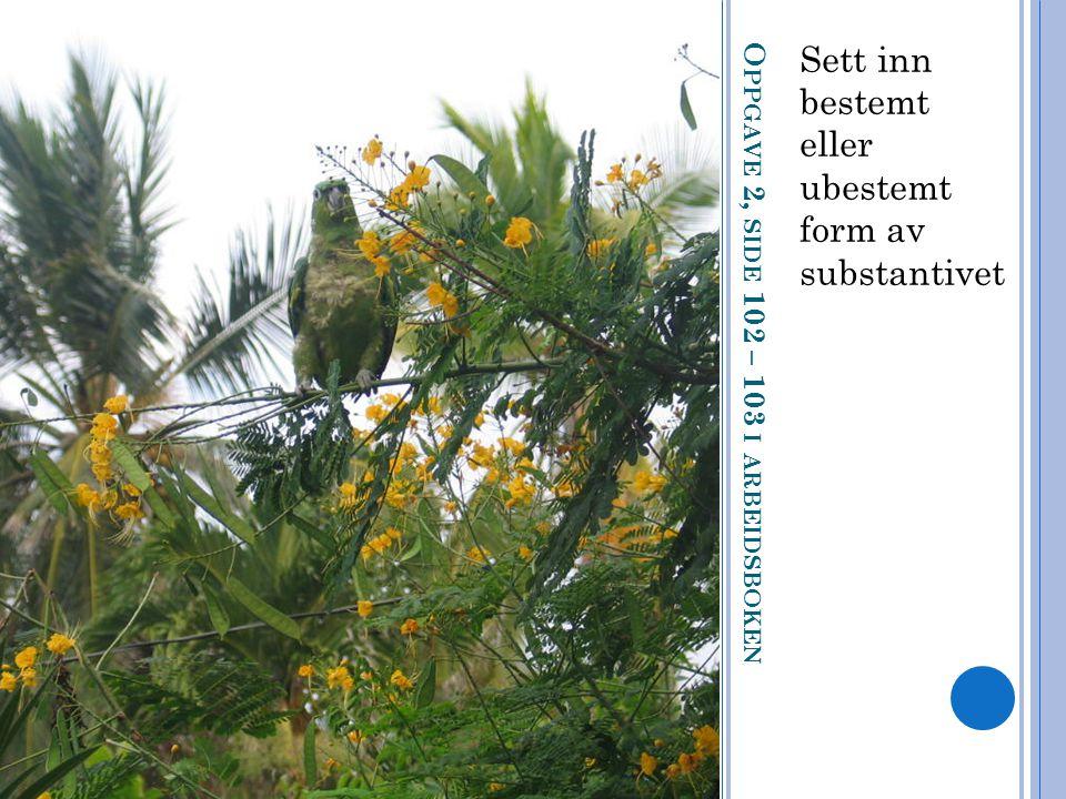 O PPGAVE 2, SIDE 102 – 103 I ARBEIDSBOKEN Sett inn bestemt eller ubestemt form av substantivet