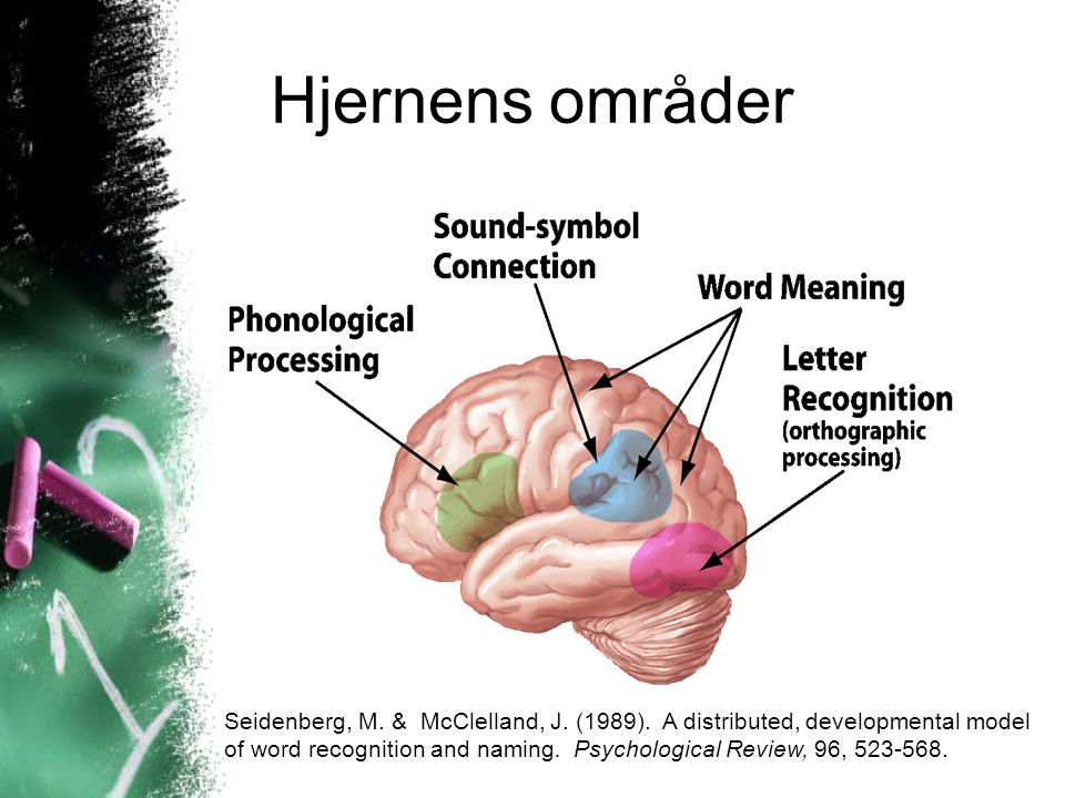 Hjernens områder Seidenberg, M. & McClelland, J. (1989). A distributed, developmental model of word recognition and naming. Psychological Review, 96,