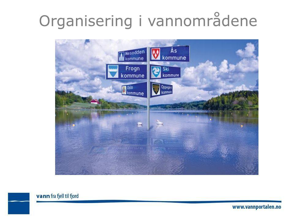 Organisering i vannområdene