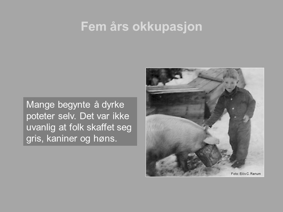 Fem års okkupasjon Mange begynte å dyrke poteter selv. Det var ikke uvanlig at folk skaffet seg gris, kaniner og høns. Foto: Eiliv C. Ranum