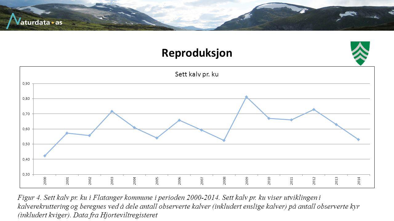 Reproduksjon Figur 4. Sett kalv pr. ku i Flatanger kommune i perioden 2000-2014. Sett kalv pr. ku viser utviklingen i kalverekruttering og beregnes ve