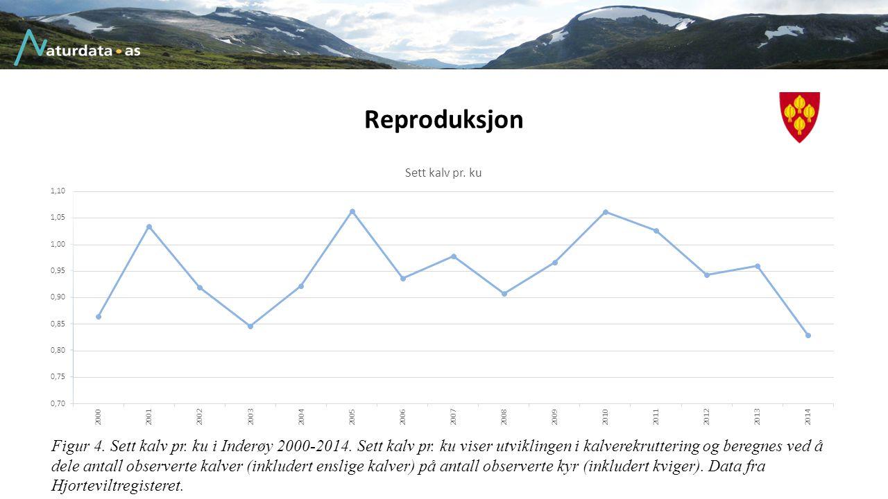 Reproduksjon Figur 4. Sett kalv pr. ku i Inderøy 2000-2014. Sett kalv pr. ku viser utviklingen i kalverekruttering og beregnes ved å dele antall obser