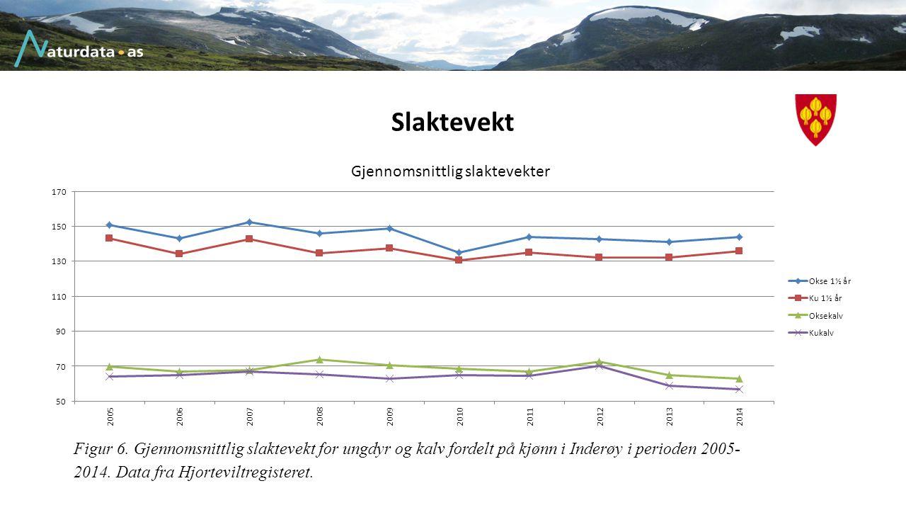Slaktevekt Figur 6. Gjennomsnittlig slaktevekt for ungdyr og kalv fordelt på kjønn i Inderøy i perioden 2005- 2014. Data fra Hjorteviltregisteret.