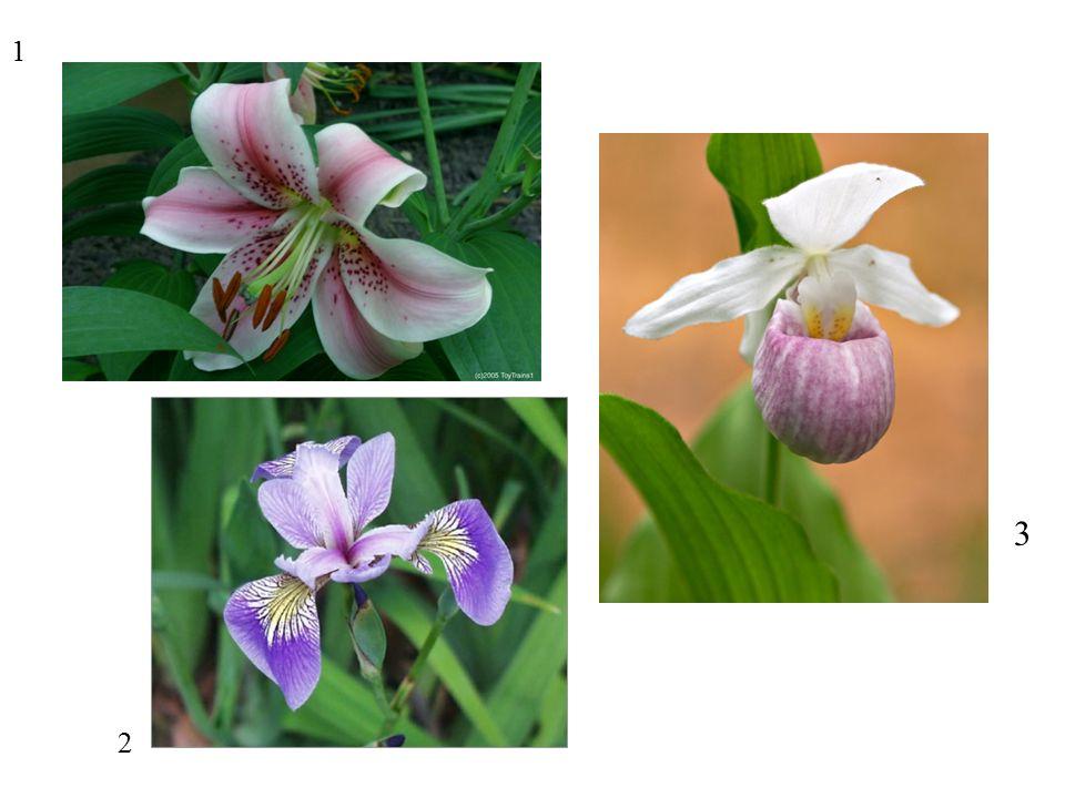 60 61 Pollination: Pseudocopulation